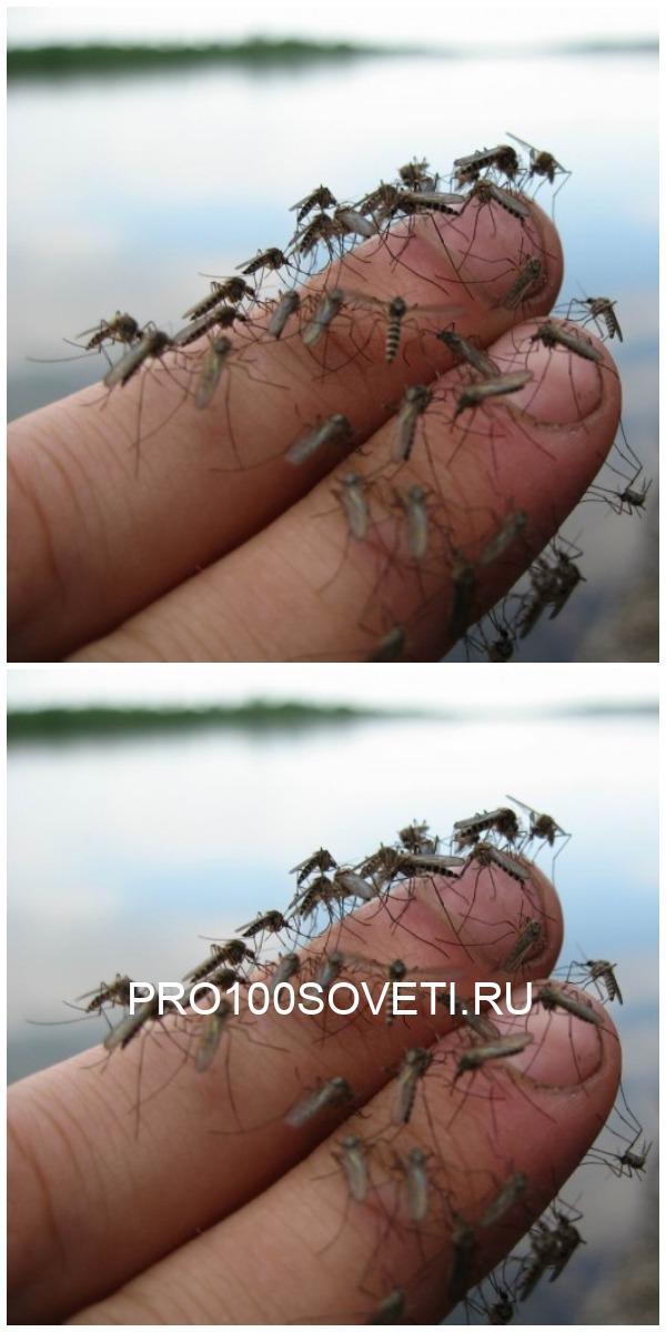 Мощное и ОЧЕНЬ простое средство от комаров