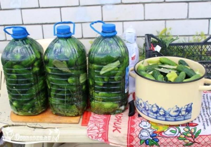 Солим огурцы в пластиковых бутылках. Получаются настоящие бочковые огурчики