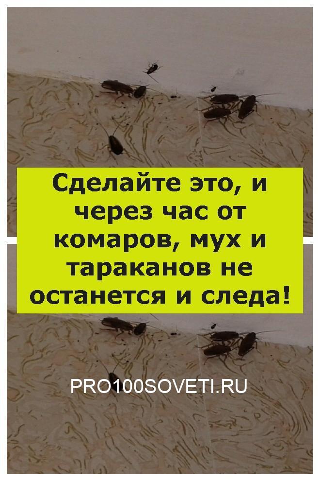 Сделайте это, и через час от комаров, мух и тараканов не останется и следа!