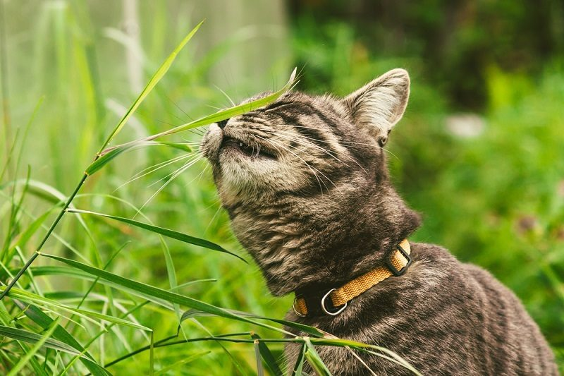 the-cat-is-eating-grass-in-the-park