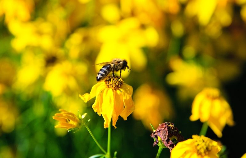 bee-on-the-yellow-flower