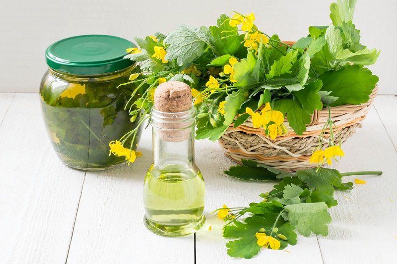 celandine-herbs-tincture-and-oil-herbal